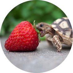 baby tortoise!
