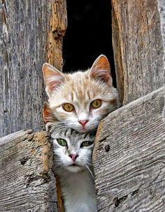 #Cats #cutecat
