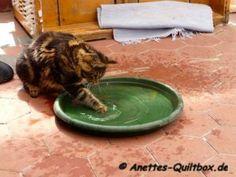 Wasserscheue Katzen, nicht bei uns!
