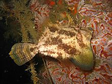 Deep Sea, Fish, Pets, Animals, Animales, Animaux, Pisces, Animal, Animais