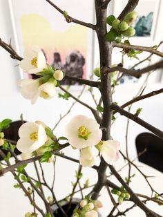 Let Spring In! Forcing Branches | Poppytalk