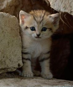 sand kitten- adorable :-)