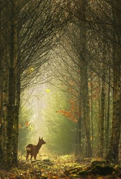 deer in a clearing in the trees
