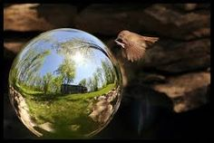 Image result for mirror reflection