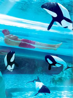 Aquatica Orlando (Florida) There's a reason this is the ninth-most visited amusement park in the US: Spanning 200 acres, Aquatica Orlando showcases live shows (see Shamu!) and animal exhibits -- stingrays, turtles, flamingos and more -- plus rides like Dolphin Plunge, the most popular ride in the park. This pic shows why