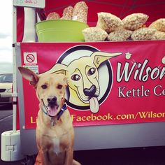 Do you want to make money for your school, club, team, or other organization? Let Wilson's Kettle Corn help by selling delicious kettle corn and you get to keep some profits! Super easy way to raise money and everyone loves kettle corn! Kettle Popcorn, Tucson, How To Raise Money, Glutenfree, Fundraising, Super Easy, Organization, Club, School