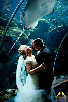 Bride and groom captured under a string ray at The Florida Aquarium.  Her smile is just right in the beautiful sunlight.