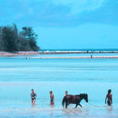 Horse Trekking at Muri Lagoonview Bungalows #cookislands. ♥ Pinned with gratitude by www.DressageWaikato.co.nz.