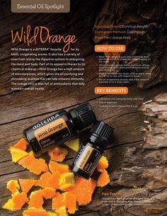 Living Magazine Summer 2015 Wild Orange Essential Oil DoTERRA - oil Spotlight #essentialoilswithjen #orange #essentialoils