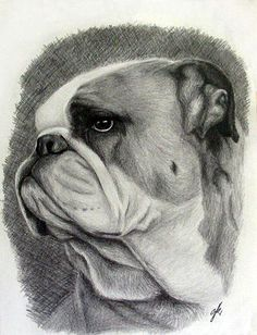 Portrait of: english bulldog (dog unknown, picture taken from polish newspaper about dogs.) Made: July 2006 It took me: Made using: pencils Portrait - English bulldog Bulldogge Tattoo, Bulldog Images, French Bulldog Tattoo, Dog Anxiety, Pet Rocks, Bulldog Puppies, Dog Art, Animal Drawings, Animal Photography