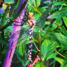 Hello Dragonfly