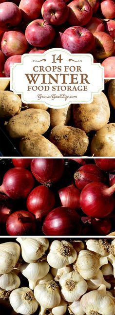 Take advantage of your local farmers' markets and farm stands in the fall and stock up on these locally grown crops for your winter food storage. If you have an area in your basement, crawlspace, or garage that stays cool all winter long, you can make use of these cold spots to keep storage crops fresh well into winter.