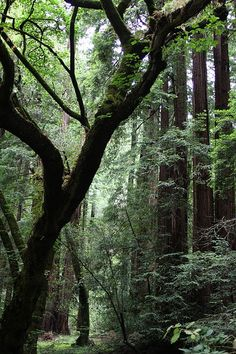 Muir Woods National Monument, which is located on the Pacific coast of southwestern Marin County, California