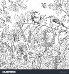 Illustration of Hand drawn floral elements. Black and white flowers, plants, butterflies and two sitting songbirds on branch. vector art, clipart and stock vectors. Garden Coloring Pages, Spring Coloring Pages, Colouring Pages, Adult Coloring Pages, Coloring Books, Flower Coloring Sheets, Wildflower Drawing, Flower Sketches, Flower Drawings