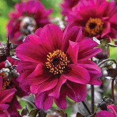 220 Flowers Perennial Ideas Flowers Perennials Flowers Perennials