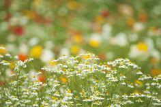 prettylittleflower: