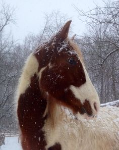 Amado in the snow.