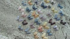 Jen and me found these coquina shells