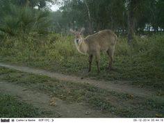 Wildcam Gorongosa