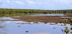 Saltmarsh is inundated during springtides. Habitats, Mountains, Places, Nature, Travel, Naturaleza, Viajes, Trips, Nature Illustration