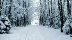 An Alaska winter scene. Alaska Winter, Winter Snow, Winter White, Forest Road, Tree Forest, Winter Pictures, Winter Is Coming, Winter Scenes, Narnia