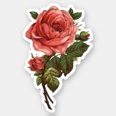 Get your hands on great customizable Rose stickers from Zazzle. Tumblr Stickers, Diy Stickers, Printable Stickers, Laptop Stickers, Journal Stickers, Scrapbook Stickers, Floral Printables, Aesthetic Stickers, Romantic Gifts