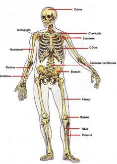 Acrylique human squelette anatomie cake topper décoration-enseignement médical cadeau