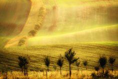***Glowing Fields (late summer, Moravia, Czech Republic) by Marek Boguszak on 500px