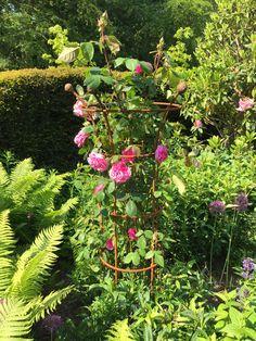 Runner Beans, Herbaceous Border, Obelisks, Steel, Garden, Plants, Wheels, Box, Garten