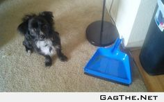 My pup had to pee when I was asleep. He didn't get any on the carpet... All in the dust pan ... I'm amazed!