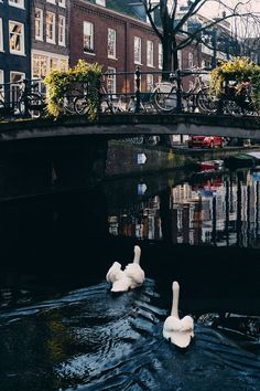jordaan-amsterdam-travel-guide-photo-diary-jess-ann-kirby-craig-mackay-photography-3