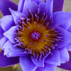 Water lily by Mark Routt