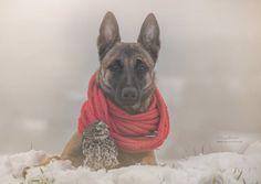 perro y buho amigos 4
