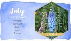 July Birth Flower July Birth Flower, Birth Month Flowers, Birth Flower Tattoos, Flower Tattoo Drawings, Birth Month Symbols, July Cancer, Larkspur Flower, Lily Wallpaper, Flower Chart