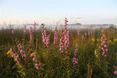 """Grow Native Plants in Missouri! This website has a """"plant picker"""" with images and everything you would want to know about these plants! Native plants bring more bugs(for birds and chickens) and many other cool benefits!"""