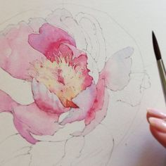 First watercolor layers of the peony More