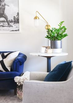 low maintenance house plants to use in interior decorating