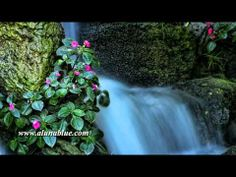 Stock Video - Stock Footage - Video Backgrounds - Hyper Nature 0301