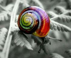 Its a snails life....