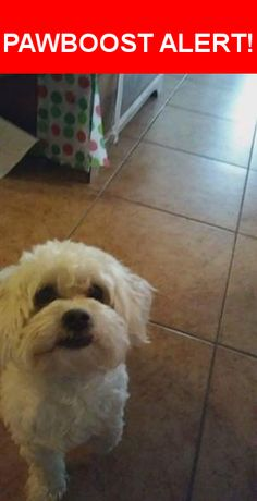 Is this your lost pet? Found in Tucson, AZ 85756. Please spread the word so we can find the owner!  Maybe Poodle and/or Shih Tzu, he is safe.  Nearest Address: South Old Nogales Highway, Tucson, AZ