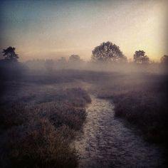 Mist ahead! - Drouwenerzand, Hondsrug, Drenthe, The Netherlands, Instagram, mist