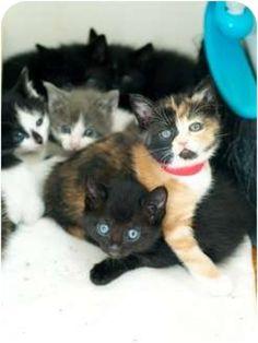 Kitten Season Strikes the Valley - Jennifer Warner's Blog - North Hollywood-Toluca Lake, CA Patch