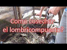 Promo videocurso Lombricultura y humus de lombriz - YouTube