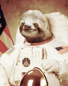 Astronaut sloth. I mean, it's a sloth, in an astronaut suit. My life in one picture.