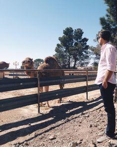 Oh yeah! El Paso has camels ;)    @elpaso.lifeandstyle