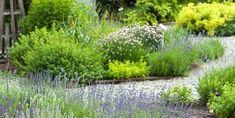 best perennial herbs
