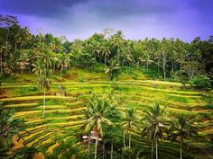 Soaking up the Balinese culture at the stunning Cekingan Rice Terrace.  This place was incredible and definitely not what I was expecting for a rice field. It completely took my breath away.  Have you had your expectations blown away on your travels recently?    #bali #riceterrace #culture #ricefields #baligasm #explorebali #balidaily #jalanjalan #indonesia #baliindonesia #jalanmelali #travelgram #girlswhotravel #instatravel #travelinspo #losthomebird