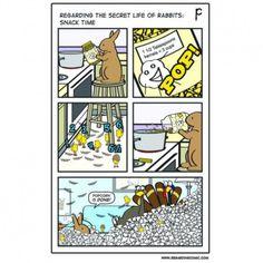 Bunny Meme, Funny Bunnies, House Rabbit, Pet Rabbit, Animals And Pets, Funny Animals, Cute Animals, Secret Life Of Rabbits, Bunny Halloween Costume