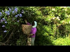 handful of bees (original title: een handvol bijen) - YouTube