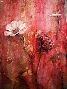 Blush of Love by Alaya Gadeh